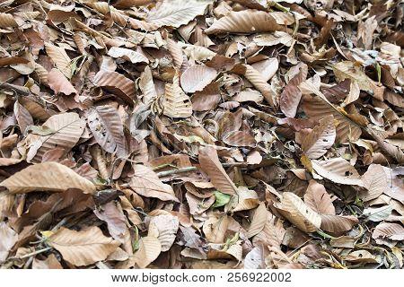 Dead Leaves On Floor Shot
