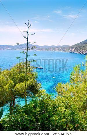 Agua de color turquesa playa de Ibiza Cala de Sant Vicent caleta de san vicente