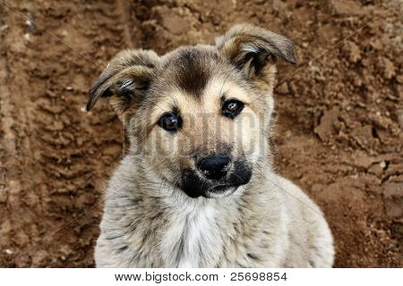 Puppy playing on the sand