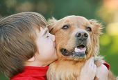 stock photo of cute dog  - Boy Kissing Golden Retriever on the Cheek