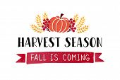 Harvest Season- Hand Drawn Lettering Phrase With Harvest Symbols. Harvest Fest Poster Design. Autumn poster