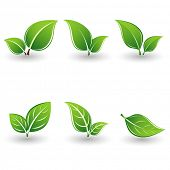 picture of green leaves  - Set of green leaves - JPG