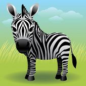 foto of baby animal  - Baby Animal collection: Zebra