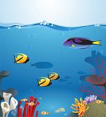 image of sea fish  - Sea landscape illustrating underwater life - JPG