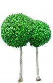Circle Shaped Green Tree For Decorative Isolated On White Background. Garden Decoration With Trimmed poster