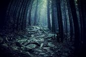 Path Through A Dark Forest. Dark Woodland At Rainy Weather poster