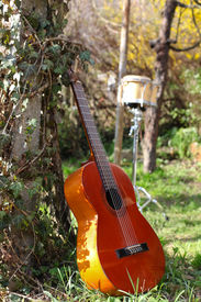 picture of musical instrument string  - Classical guitar leaning against tree in nature - JPG