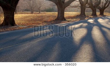 Trees And Shadows