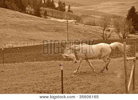 Caballo blanco en Rural escénico en tonos Sepia