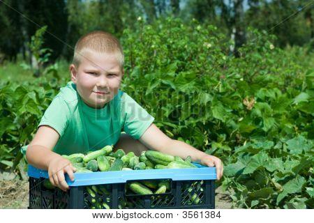 In Vegetable Garden