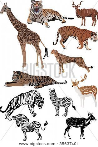 illustration with different animals collection isolated on white background
