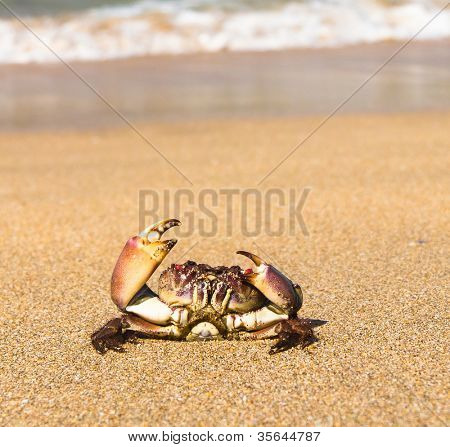 Cute Animal Seafood Posing