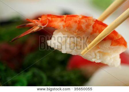 susi sushi