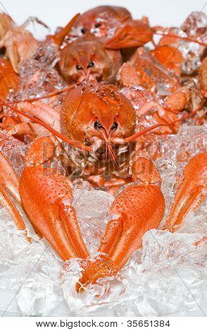 crawfish on ice
