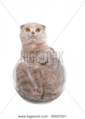 Kitten in a Round aquarium. isolated.