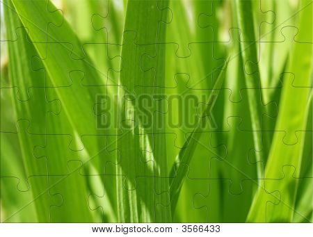 3D Puzzles With Image Spring Green Grass