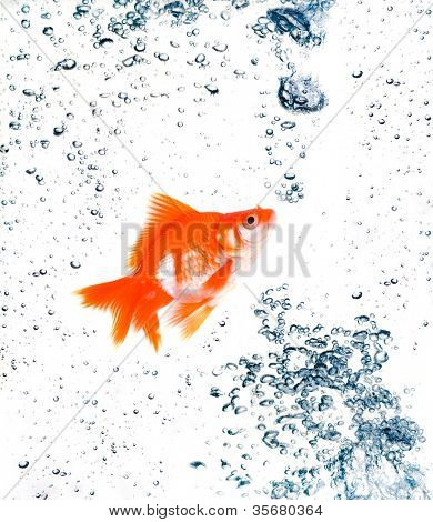 goldfish with bubbles