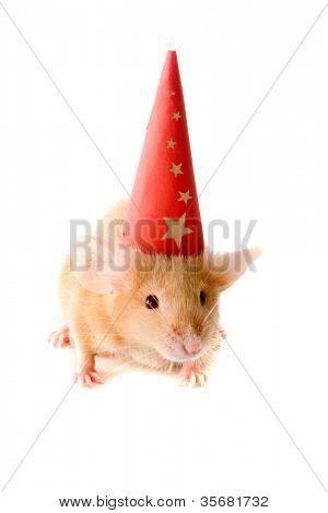 Ratte in ein neues Jahr-Cap. Isolierung auf weiß.