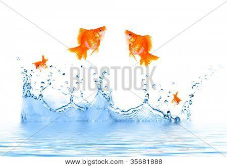 Peixinho está saltando para fora da água