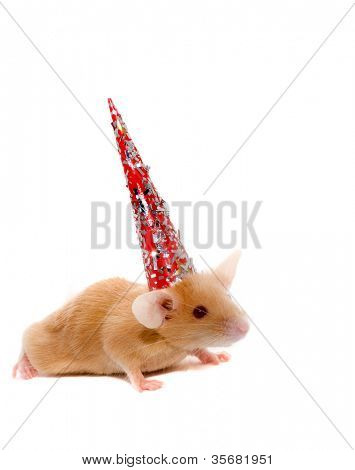 rat in cap. Isolation on white.