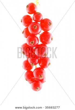 Red currant. Isolation on white