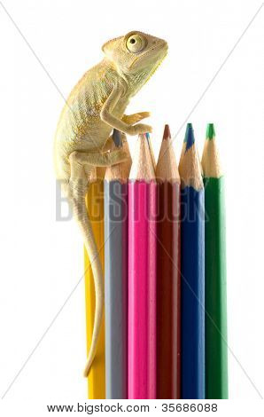 The lizard and color pencils.