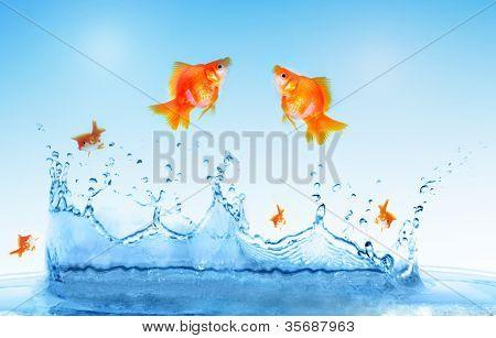 Goldfisch ist aus dem Wasser springen.