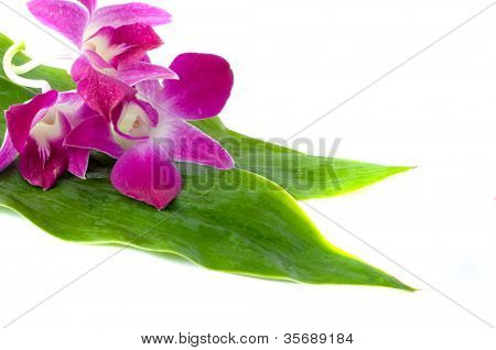 Flower  orchid and leaf. Isolation on white