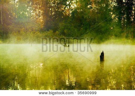 Nebel in einem Holz