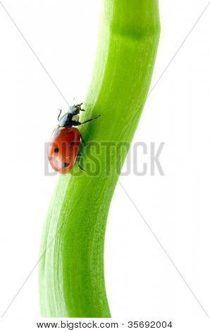 green leaf with ladybug