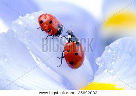 flower petal with ladybug