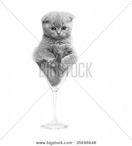 Kitten in a glass. isolated.
