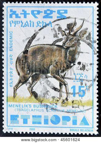 Äthiopien - Circa 2000: Eine Briefmarke gedruckt In Äthiopien zeigt Menelik? s Buschbock, Circa 2000