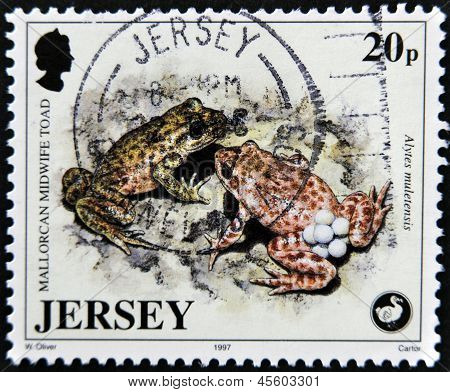 JERSEY - CIRCA 1997: A stamp printed in Jersey shows mallorcan midwife toad alytes muletensis