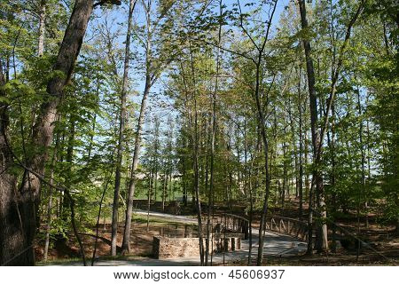 wooden bridge along forests pathway
