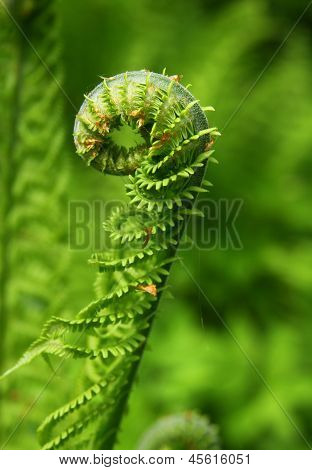 fern fronds close up
