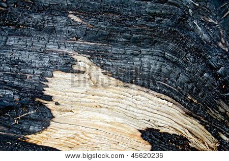 Wood Charred