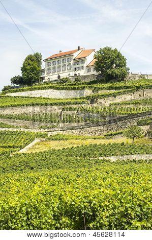 Vineyards In Switzerland