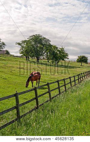 Vaud (switzerland) - Horses