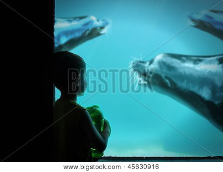 Little Boy At Zoo With Sea Lions In Water