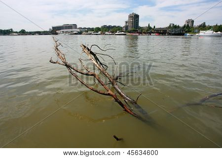 Cleaning Of River Branches Dead Wood In The Mist