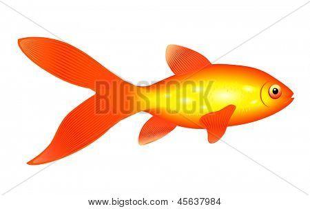 golden cartoon fish