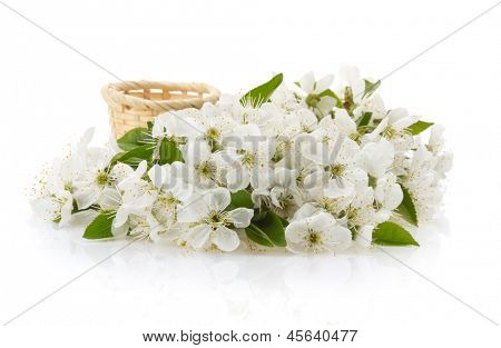 blossom branch isolated on white background