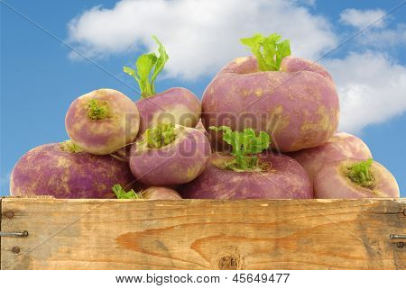 freshly harvested spring turnips (Brassica rapa) in a wooden crate against a blue sky with clouds