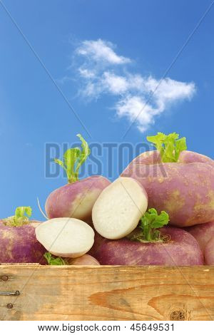 freshly harvested spring turnips (Brassica rapa) and a cut one against a blue sky with clouds