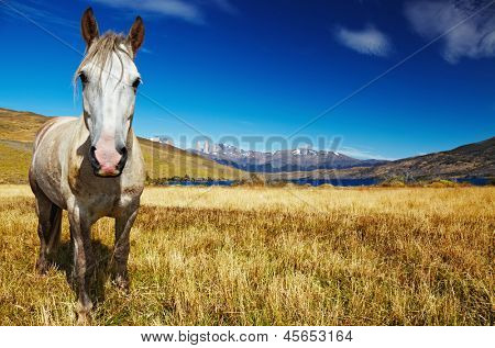 Horse in Torres del Paine National Park, Laguna Azul, Patagonia, Chile
