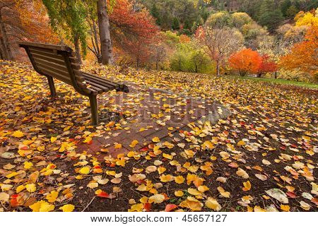A park bench overlooks a stunning autumn scene
