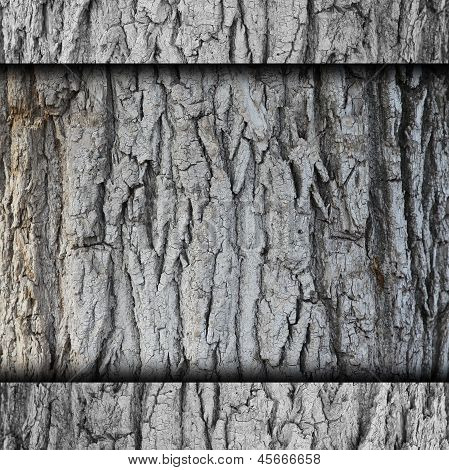 tree, bark background wall grunge fabric abstract stone texture