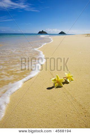 Blossoms Lie On White Sand
