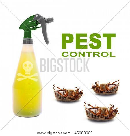 Plastic sprayer with insecticide and dead bugs. Pest control concept.
